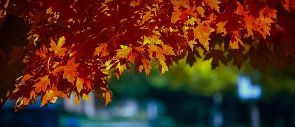 otoño en Riudarenes