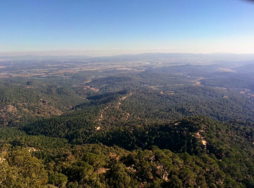La selva en Girona