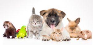 mascotas en un alojamiento rural